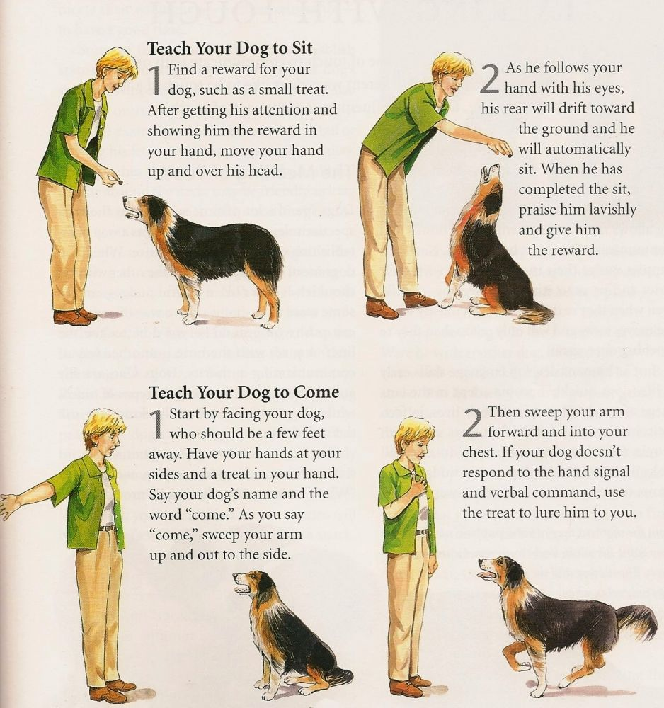 how to write a manual for caring for dogs