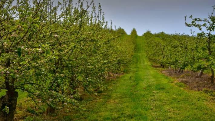 fruit tree spraying guide nz